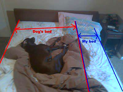 Dogs Hogging The Bed