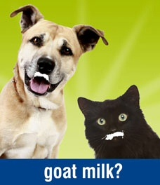 http://answerspetfood.com/images/goat-milk.jpg